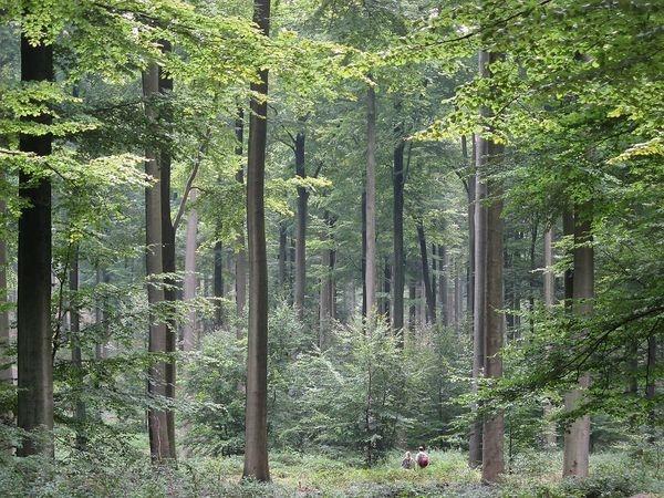 Jobba i de norska skogarna