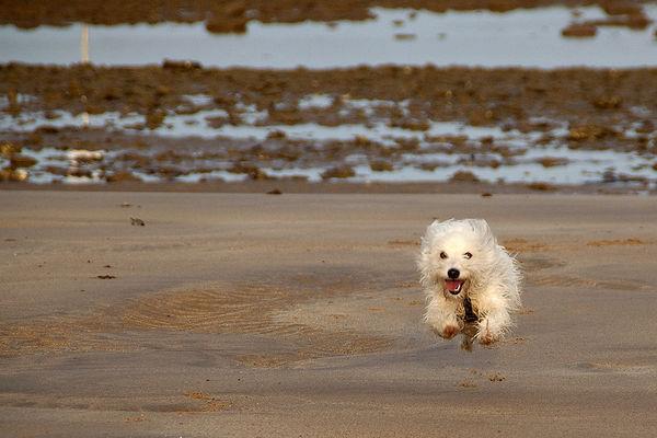 Striktare regler för hundens Norge-resa